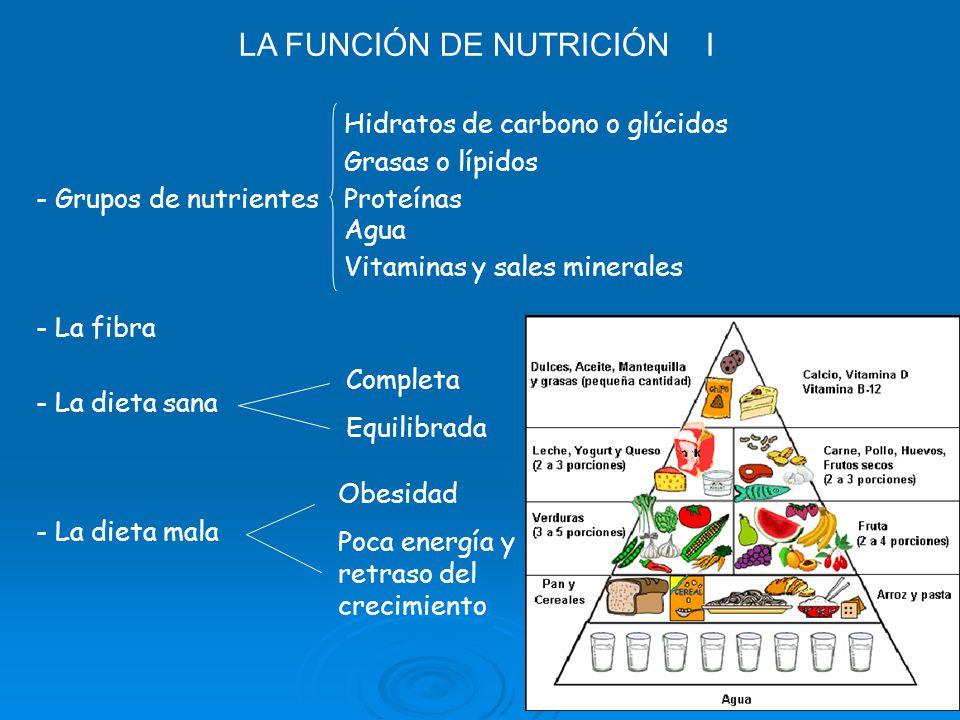 LA FUNCIÓN DE NUTRICIÓN I