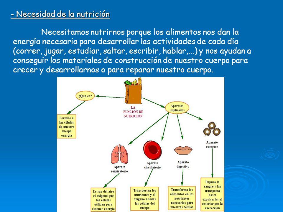 - Necesidad de la nutrición