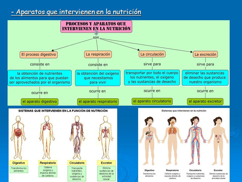 - Aparatos que intervienen en la nutrición