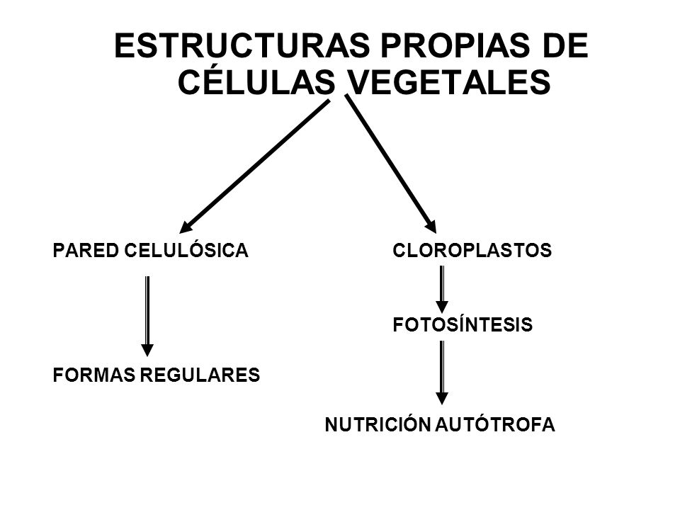 ESTRUCTURAS PROPIAS DE CÉLULAS VEGETALES