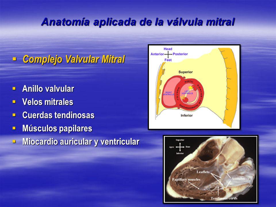 Fantástico Válvula Mitral Tee Anatomía Inspiración - Anatomía de Las ...