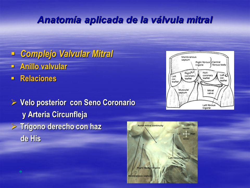 Fantástico Tee Anatomía De La Válvula Mitral Embellecimiento ...
