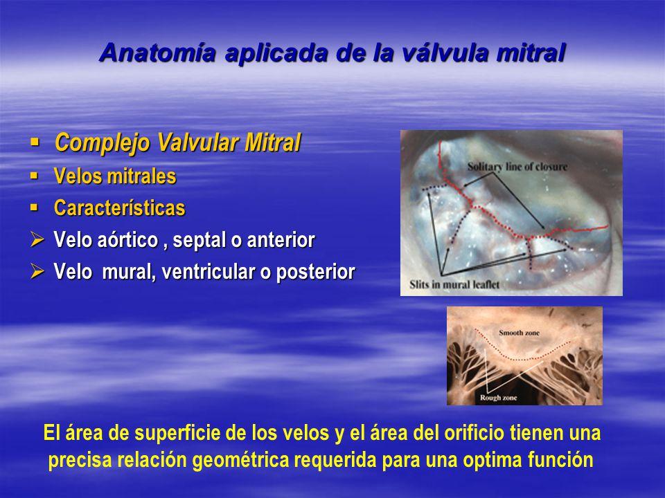 Asombroso Tee Anatomía De La Válvula Mitral Composición - Anatomía ...