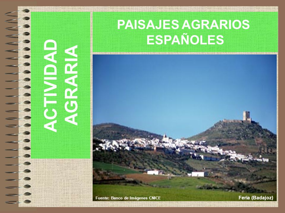 ACTIVIDAD AGRARIA PAISAJES AGRARIOS ESPAÑOLES Feria (Badajoz)