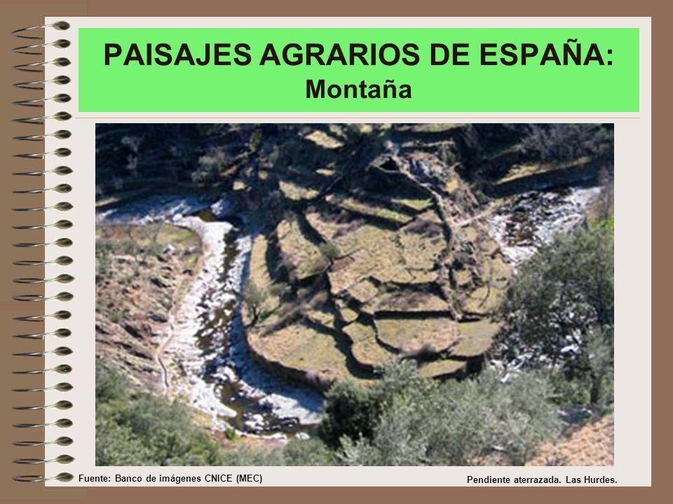 PAISAJES AGRARIOS DE ESPAÑA: Montaña