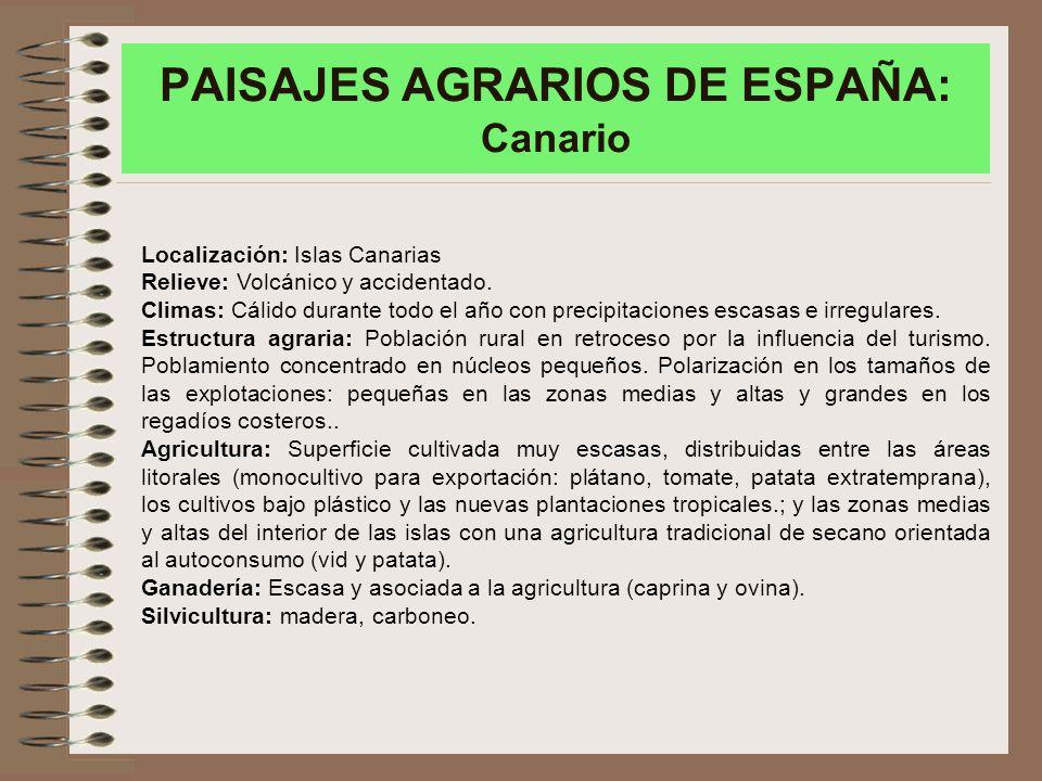 PAISAJES AGRARIOS DE ESPAÑA: Canario