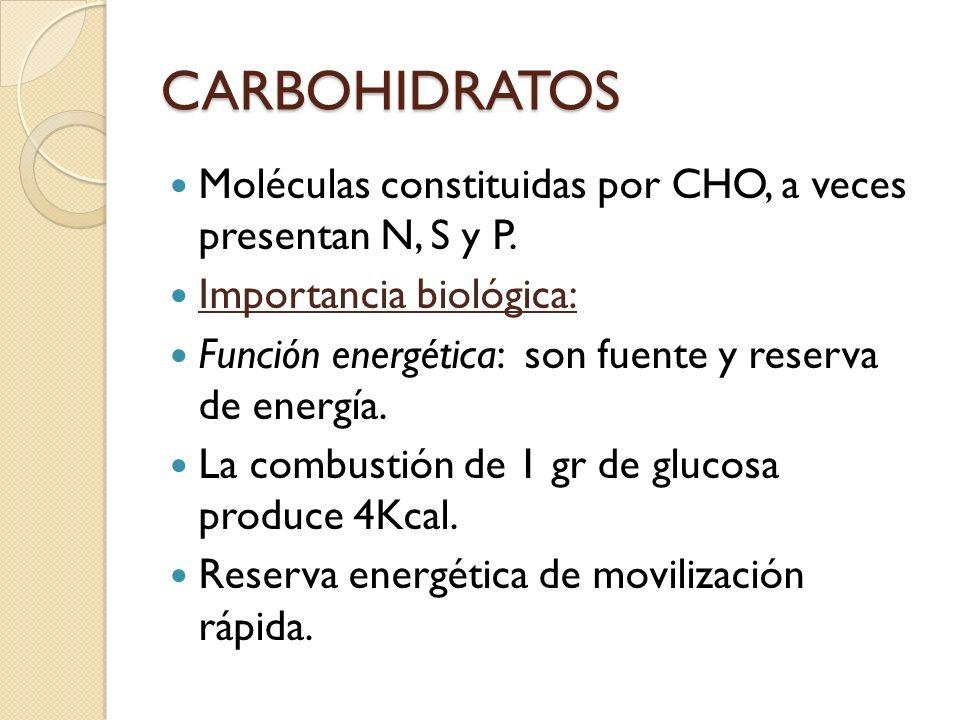 CARBOHIDRATOS Moléculas constituidas por CHO, a veces presentan N, S y P. Importancia biológica: