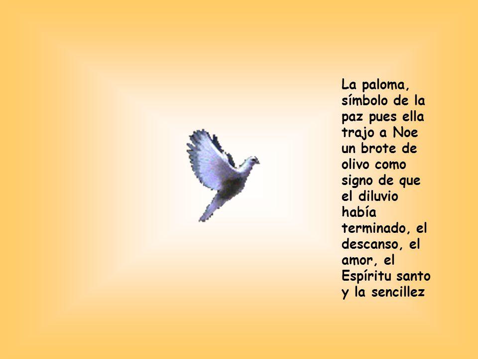 La paloma, símbolo de la paz pues ella trajo a Noe un brote de olivo como signo de que el diluvio había terminado, el descanso, el amor, el Espíritu santo y la sencillez