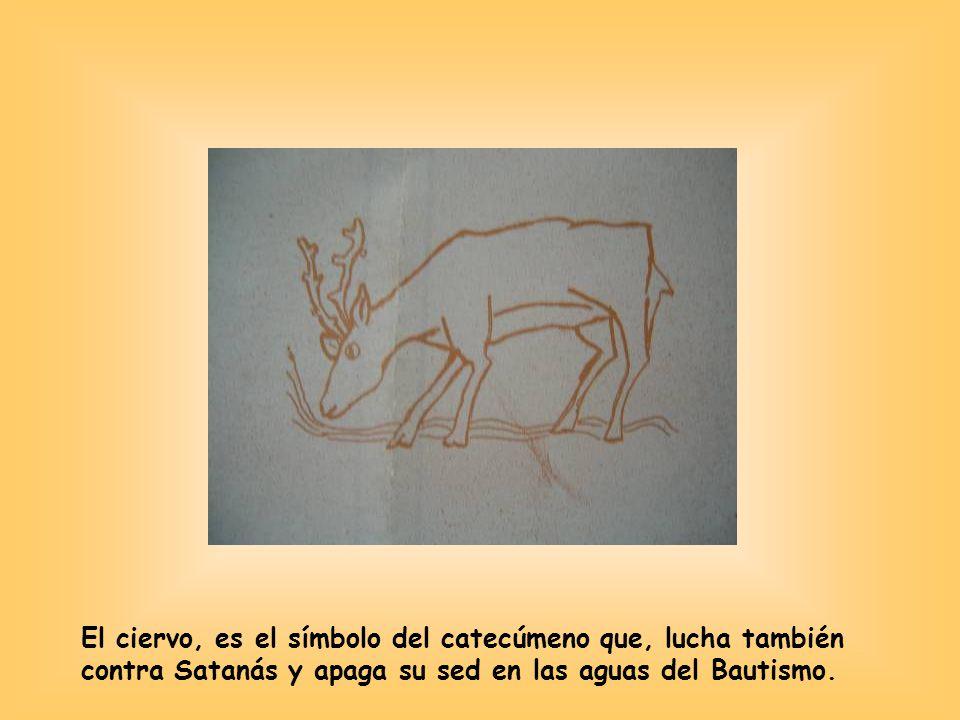 El ciervo, es el símbolo del catecúmeno que, lucha también contra Satanás y apaga su sed en las aguas del Bautismo.