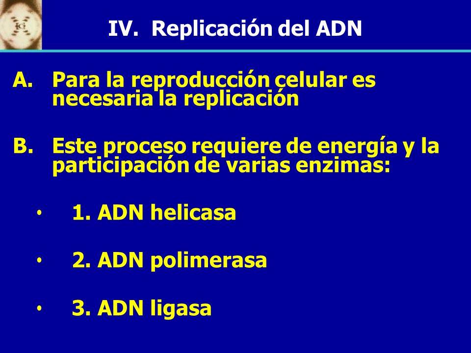 IV. Replicación del ADN Para la reproducción celular es necesaria la replicación.