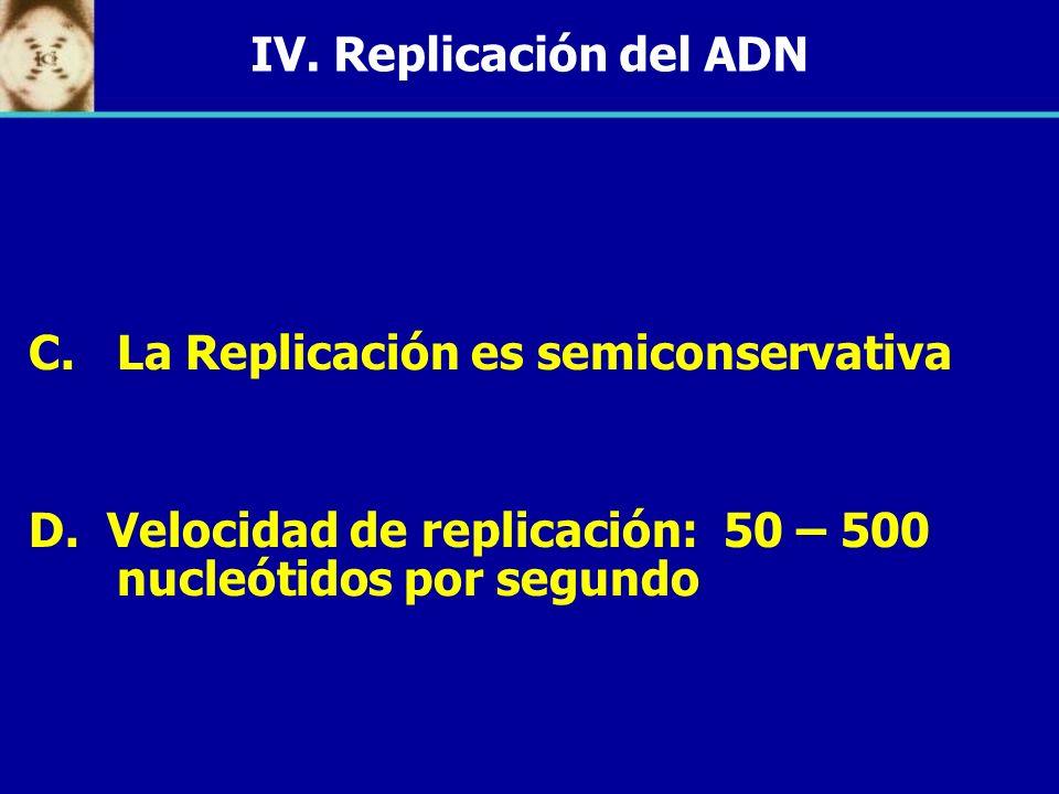 IV.Replicación del ADNLa Replicación es semiconservativa.