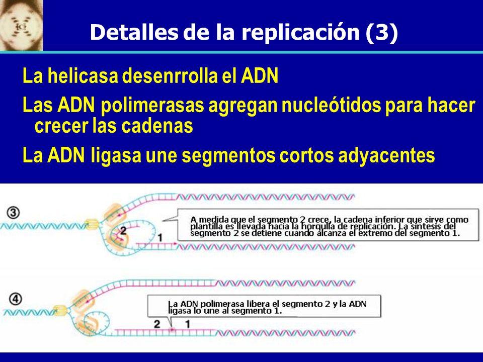 Detalles de la replicación (3)