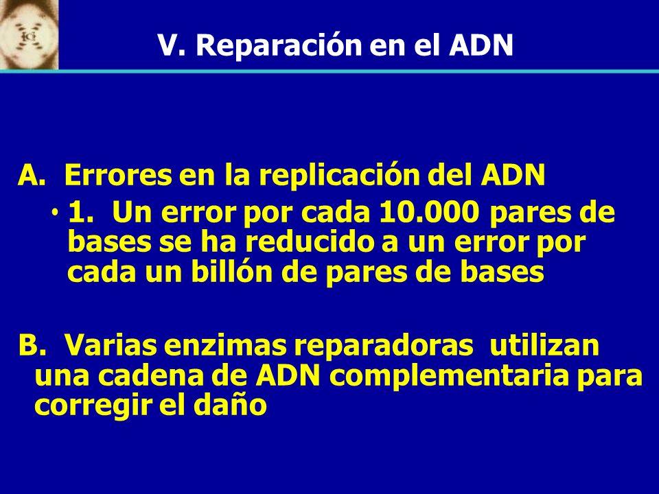 V. Reparación en el ADN A. Errores en la replicación del ADN.