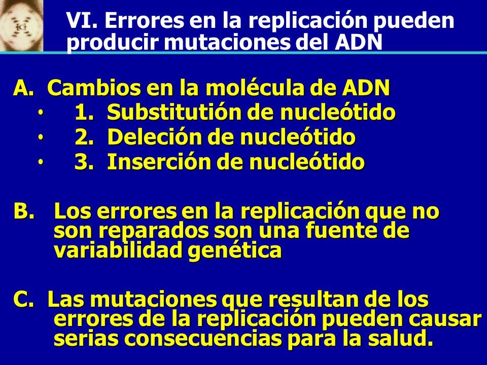 VI. Errores en la replicación pueden producir mutaciones del ADN