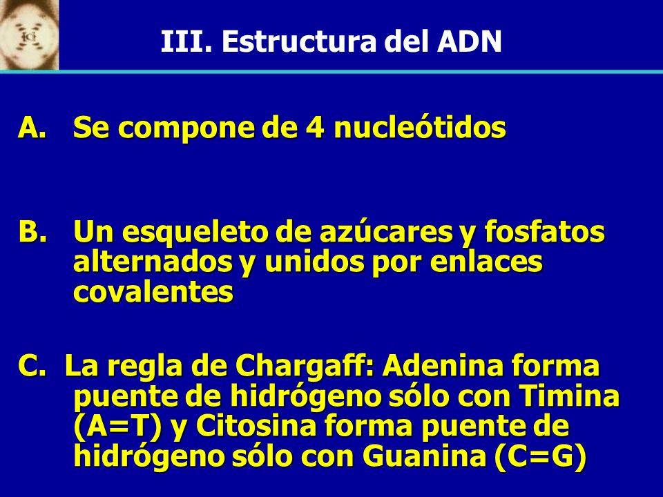 III. Estructura del ADN Se compone de 4 nucleótidos. Un esqueleto de azúcares y fosfatos alternados y unidos por enlaces covalentes.
