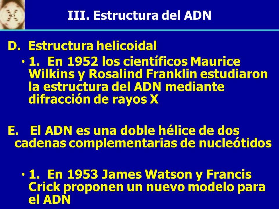 III. Estructura del ADND. Estructura helicoidal.
