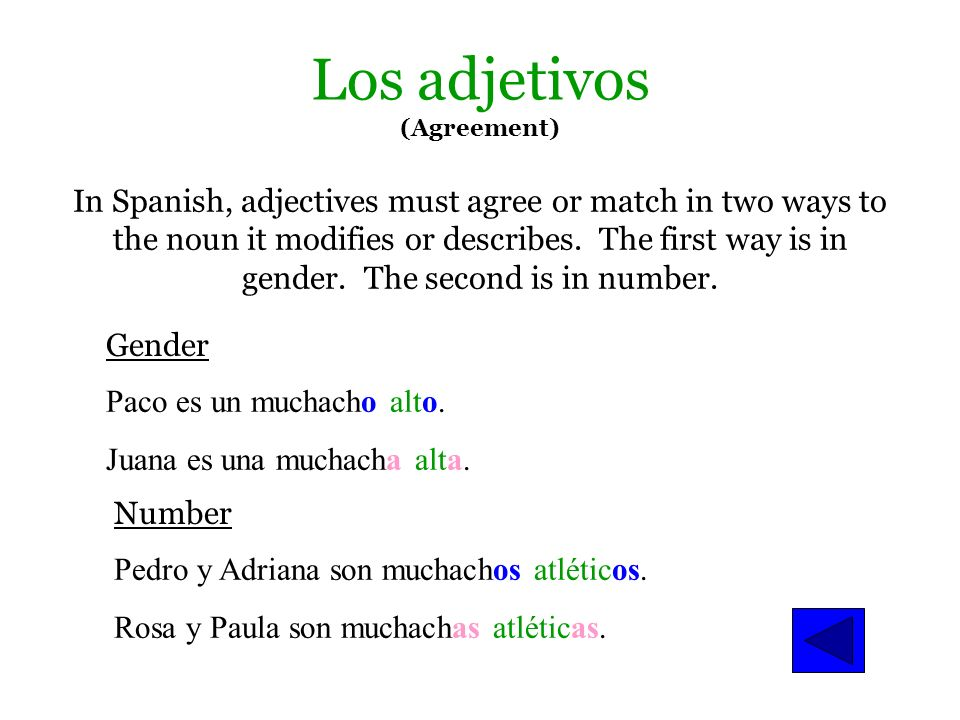 Los adjetivos (Agreement)