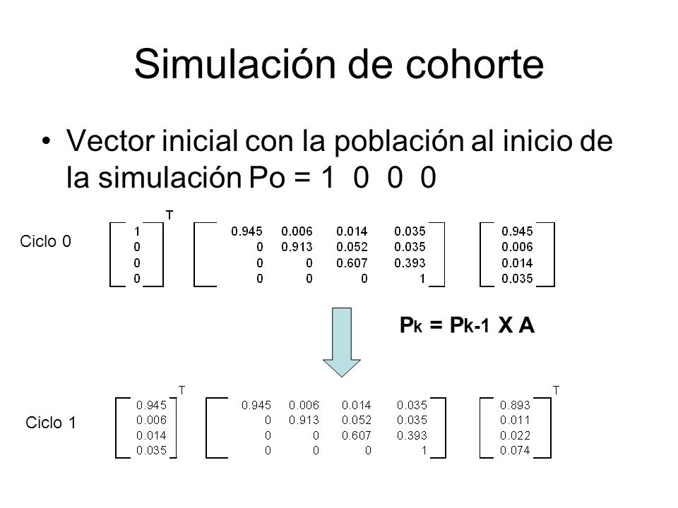 Simulación de cohorte Vector inicial con la población al inicio de la simulación Po = 1 0 0 0. Ciclo 0.