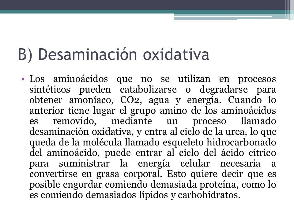 B) Desaminación oxidativa