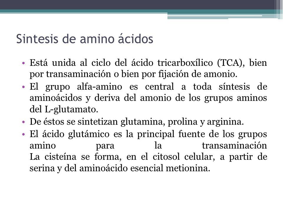 Sintesis de amino ácidos