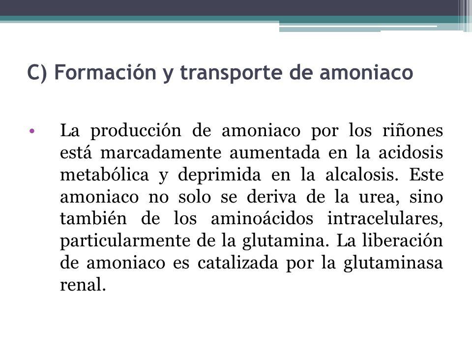 C) Formación y transporte de amoniaco
