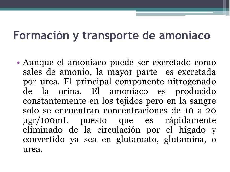 Formación y transporte de amoniaco