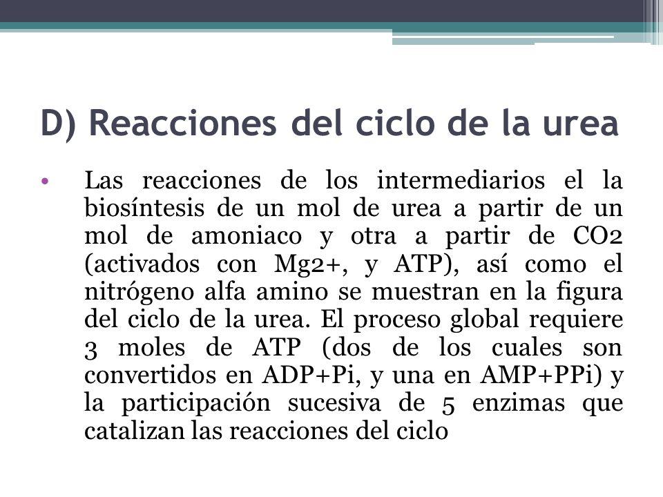 D) Reacciones del ciclo de la urea