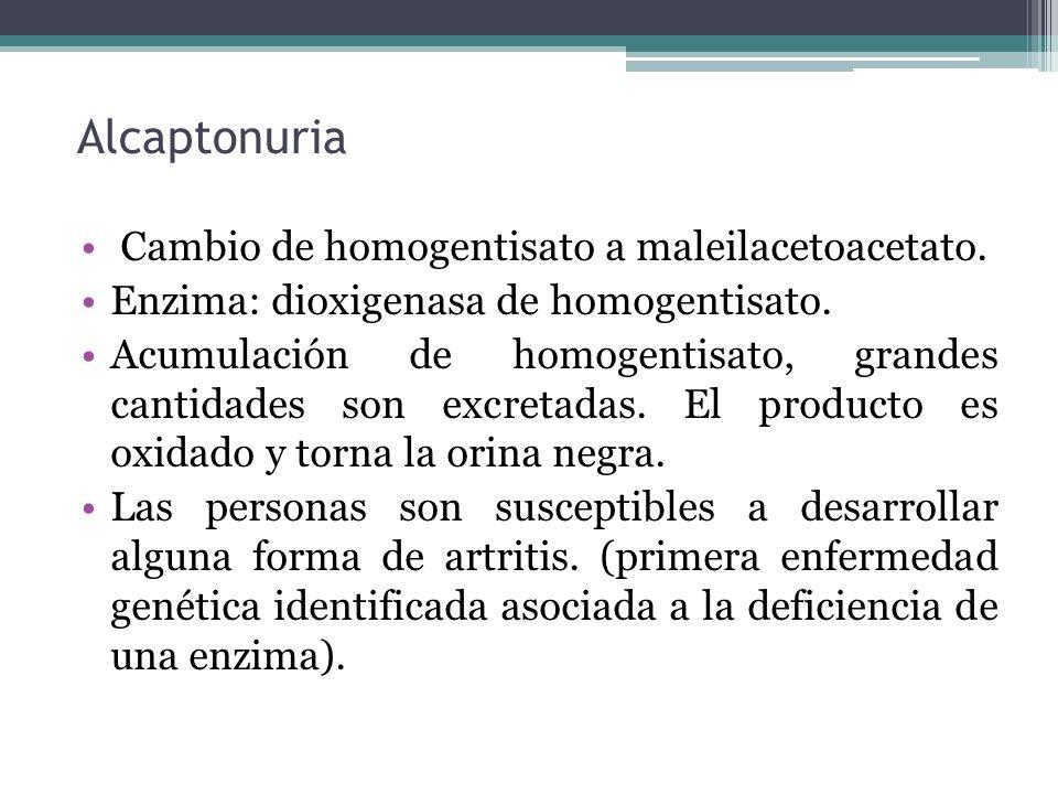 Alcaptonuria Cambio de homogentisato a maleilacetoacetato.