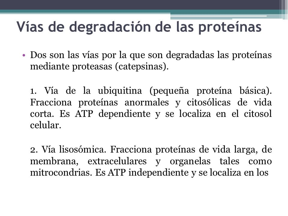 Vías de degradación de las proteínas