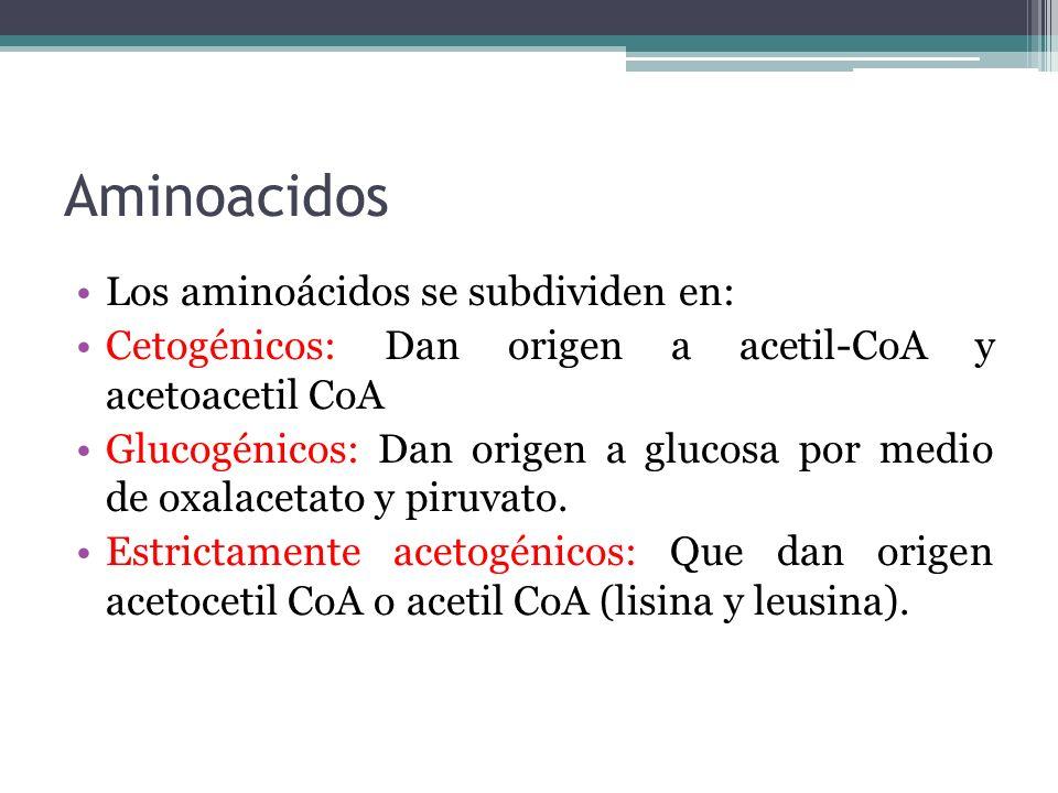 Aminoacidos Los aminoácidos se subdividen en: