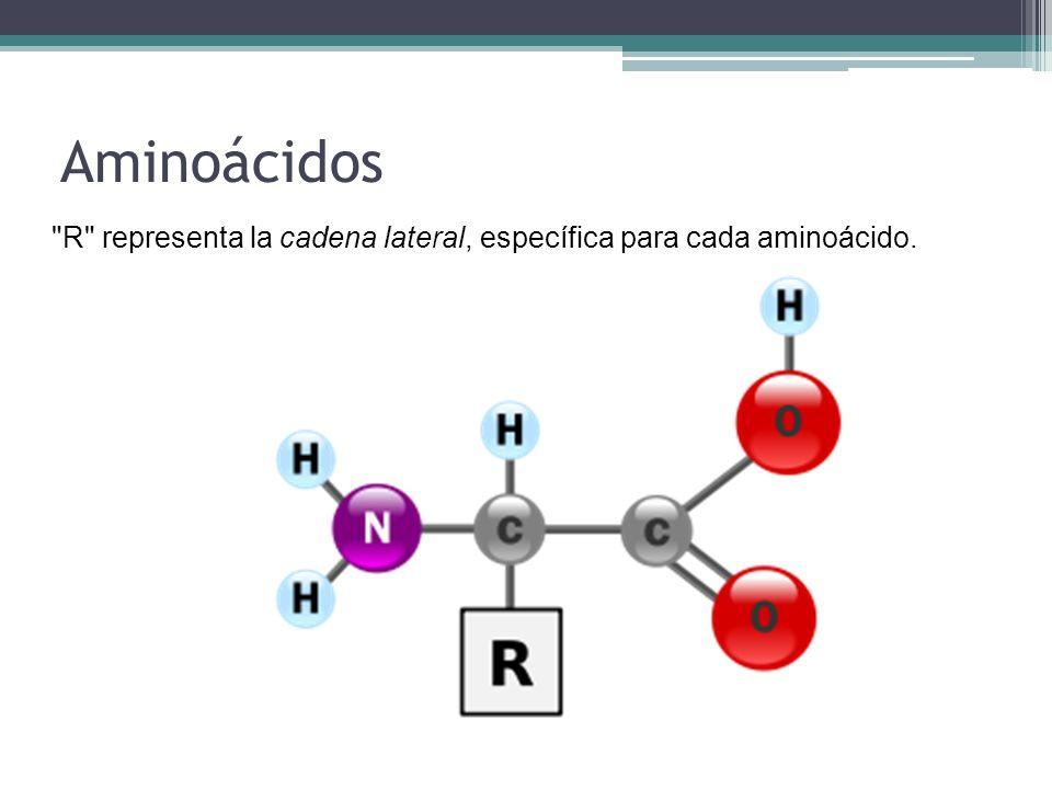 Aminoácidos R representa la cadena lateral, específica para cada aminoácido.