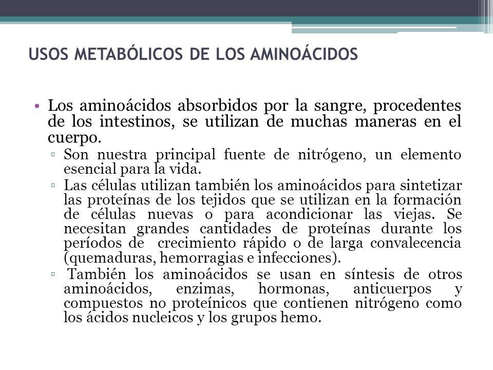 USOS METABÓLICOS DE LOS AMINOÁCIDOS