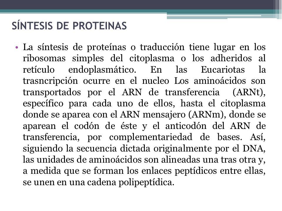 SÍNTESIS DE PROTEINAS
