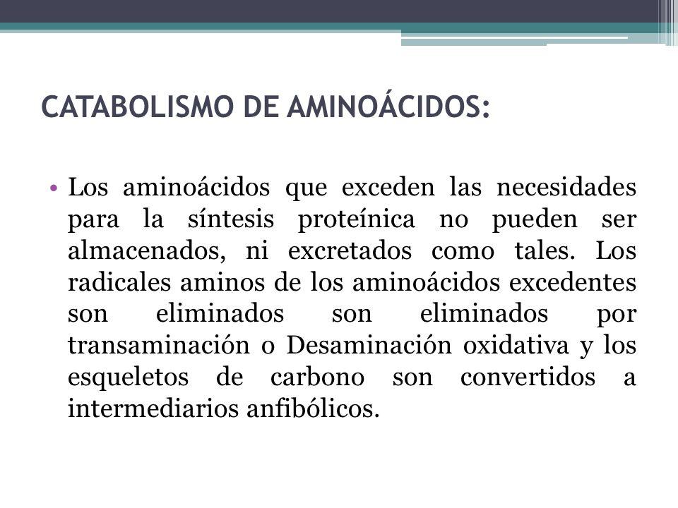CATABOLISMO DE AMINOÁCIDOS:
