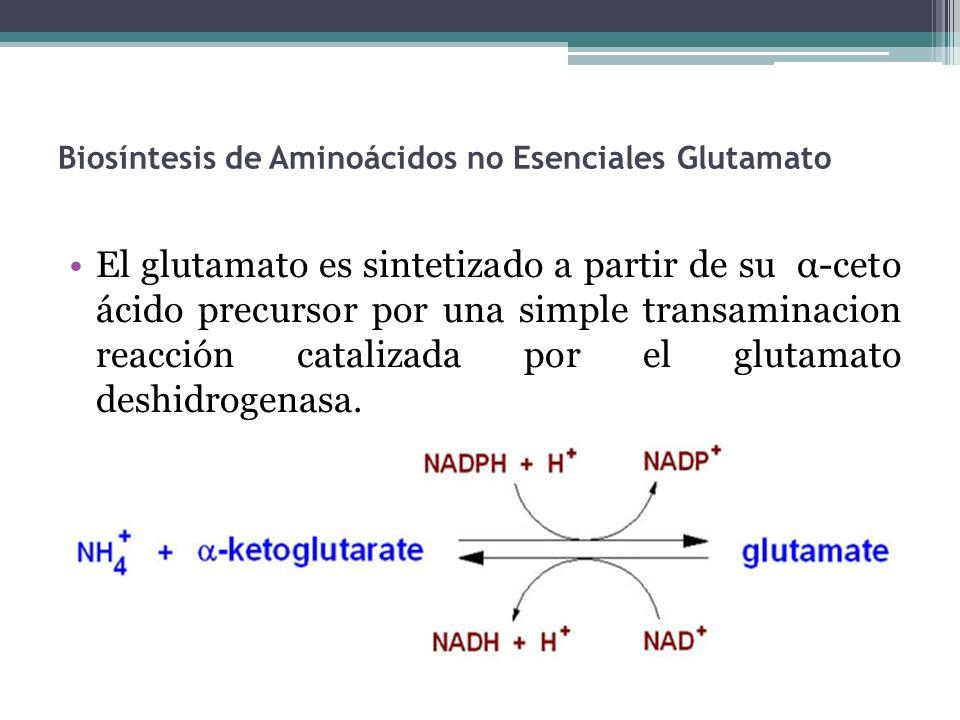 Biosíntesis de Aminoácidos no Esenciales Glutamato