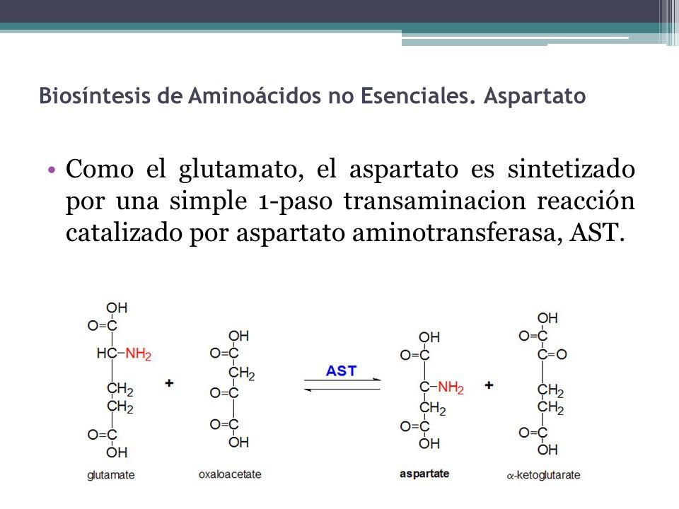 Biosíntesis de Aminoácidos no Esenciales. Aspartato