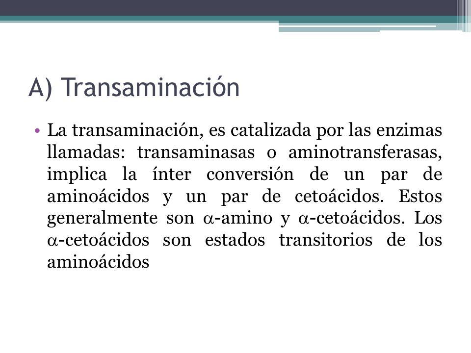 A) Transaminación