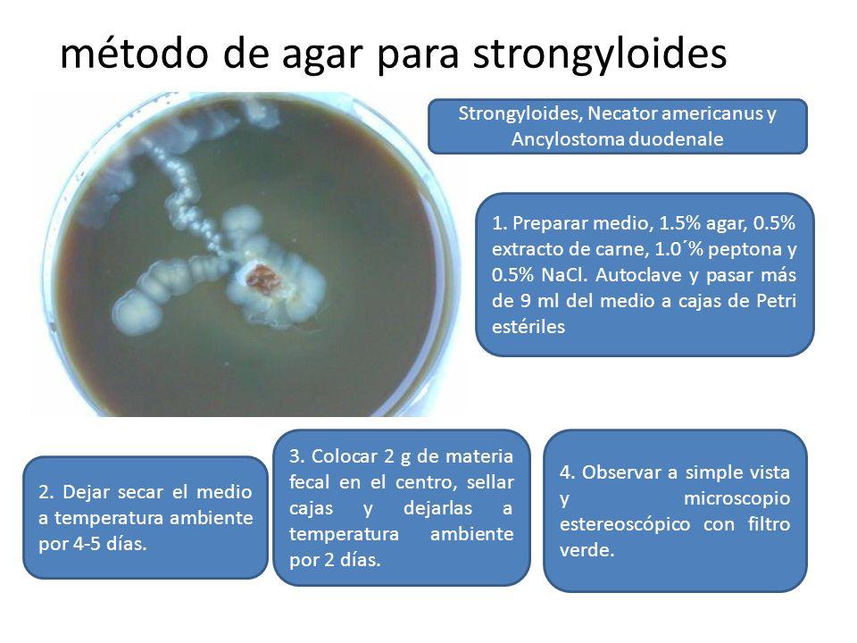 método de agar para strongyloides