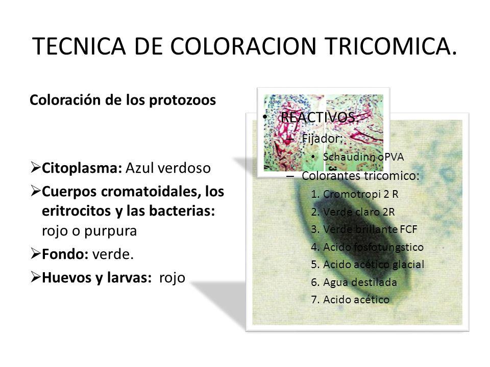 TECNICA DE COLORACION TRICOMICA.