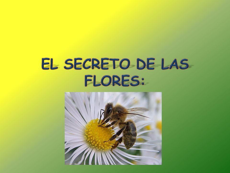 EL SECRETO DE LAS FLORES: