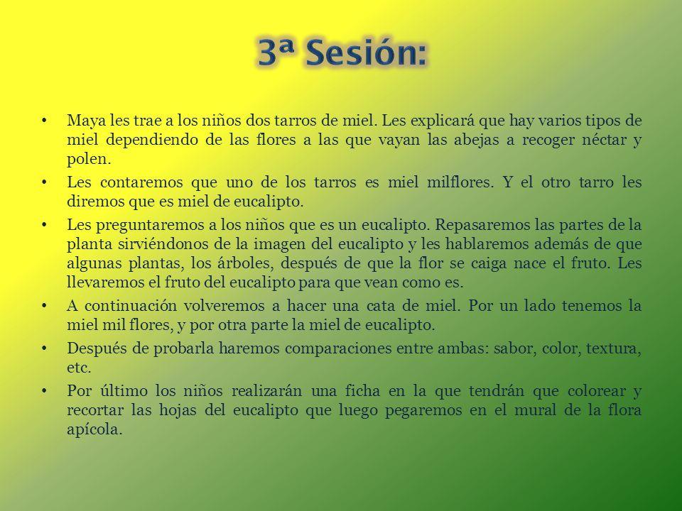 3ª Sesión: