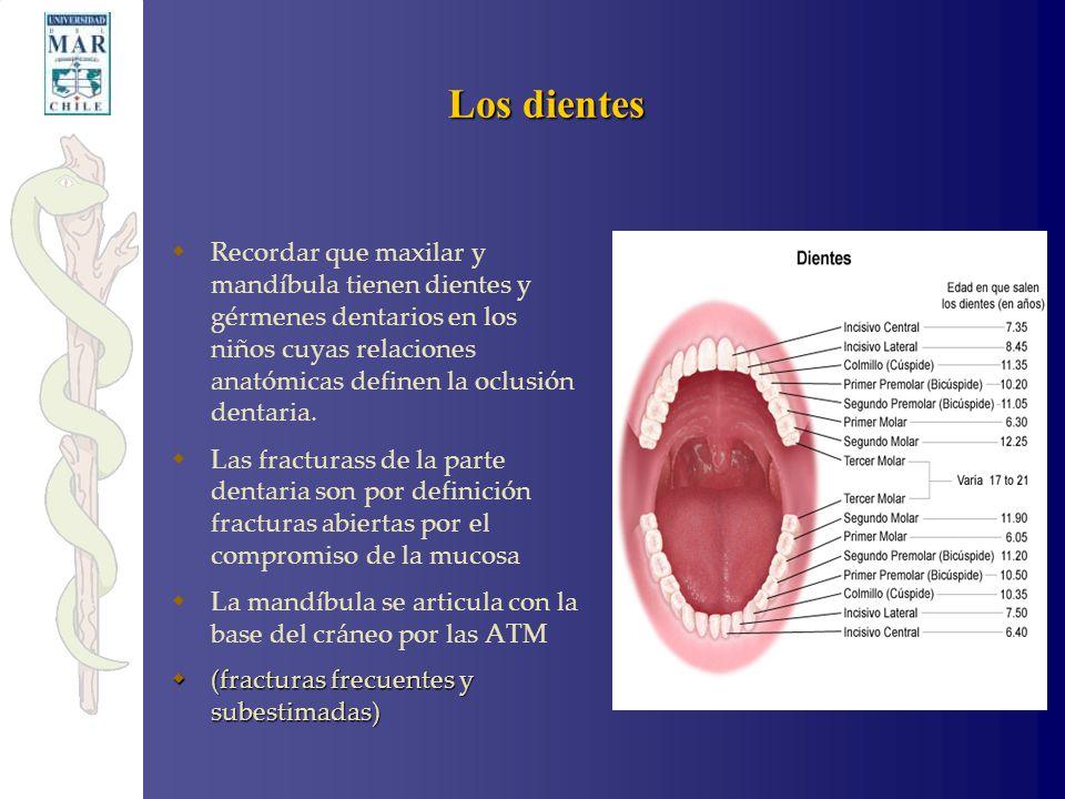 Perfecto Primero Anatomía Molar Elaboración - Anatomía de Las ...