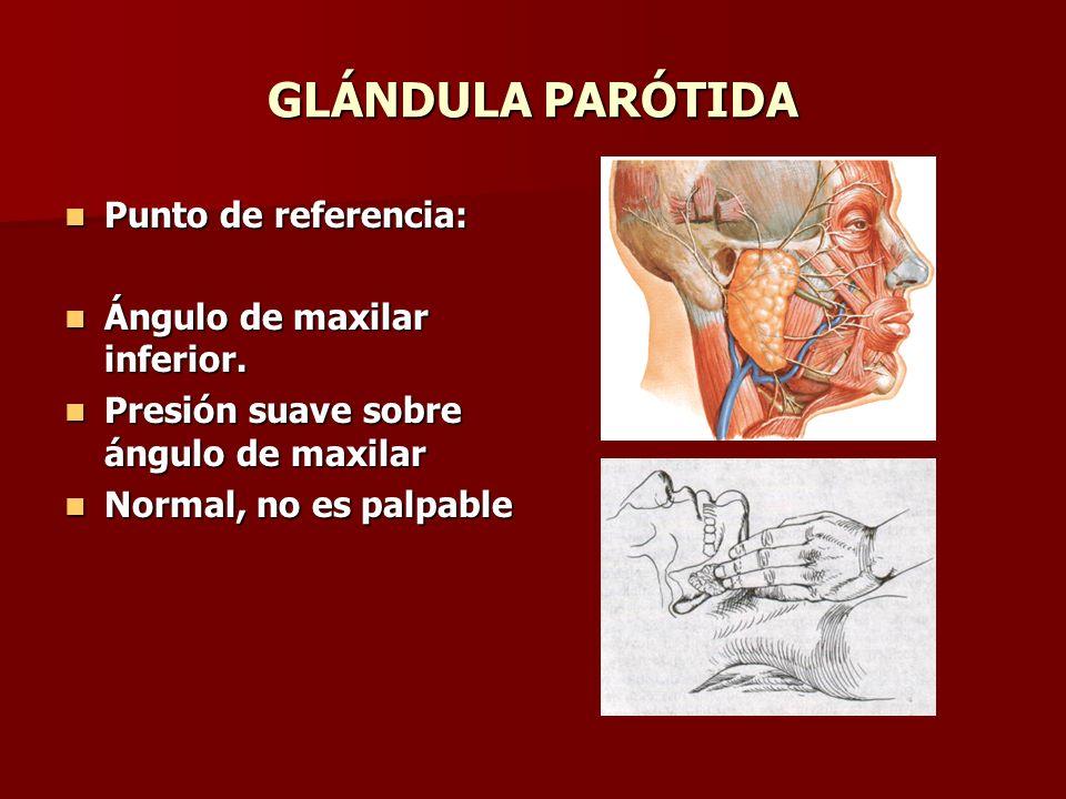 GLÁNDULA PARÓTIDA Punto de referencia: Ángulo de maxilar inferior.