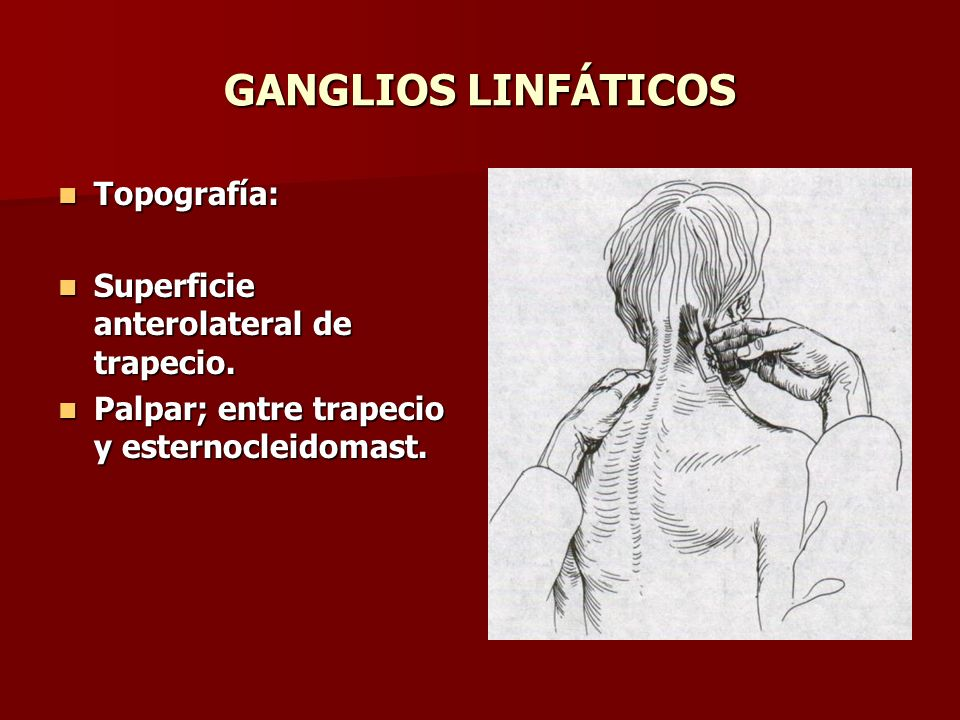 GANGLIOS LINFÁTICOS Topografía: Superficie anterolateral de trapecio.