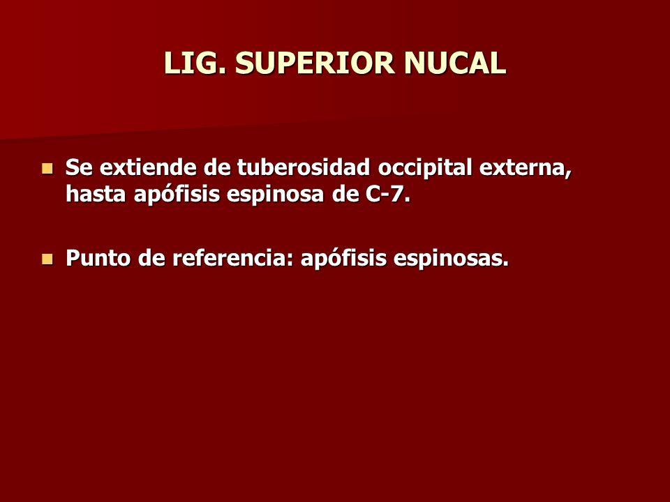 LIG. SUPERIOR NUCAL Se extiende de tuberosidad occipital externa, hasta apófisis espinosa de C-7.