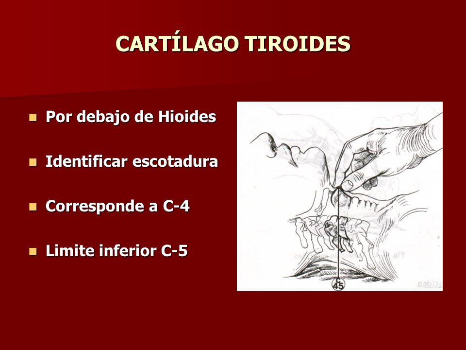 CARTÍLAGO TIROIDES Por debajo de Hioides Identificar escotadura