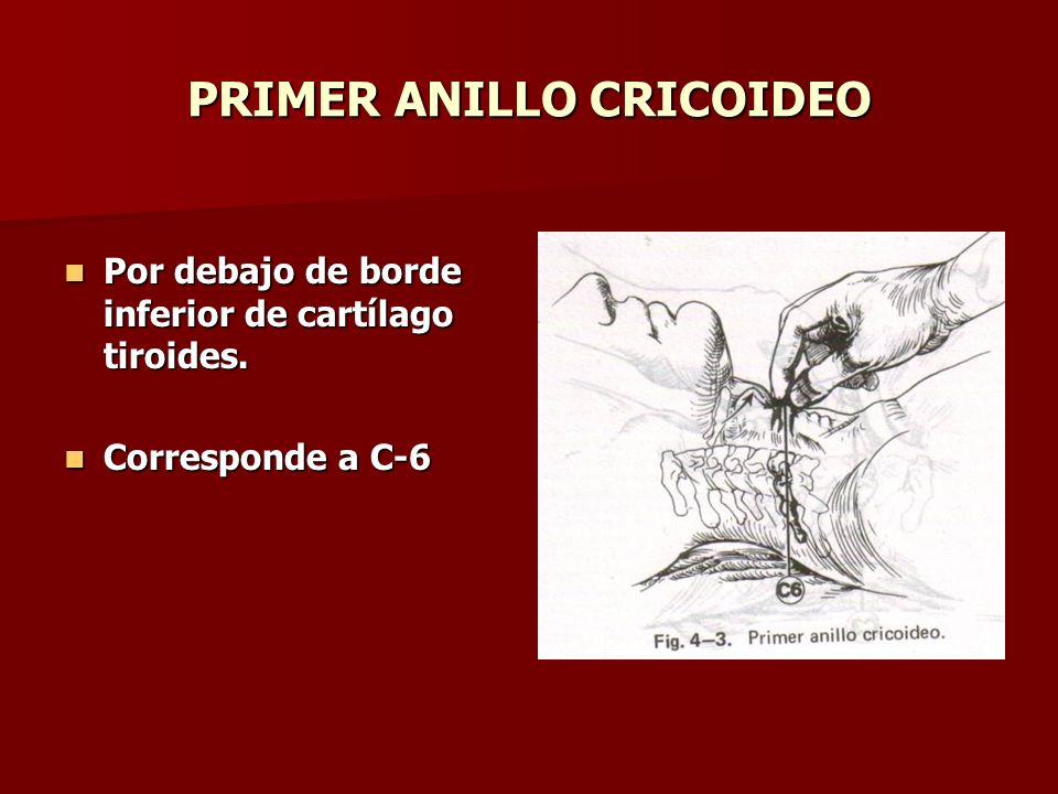 PRIMER ANILLO CRICOIDEO
