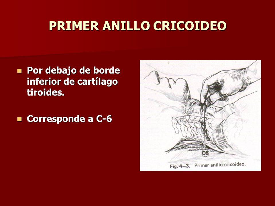 PRIMER ANILLO CRICOIDEO