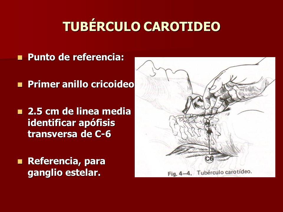 TUBÉRCULO CAROTIDEO Punto de referencia: Primer anillo cricoideo