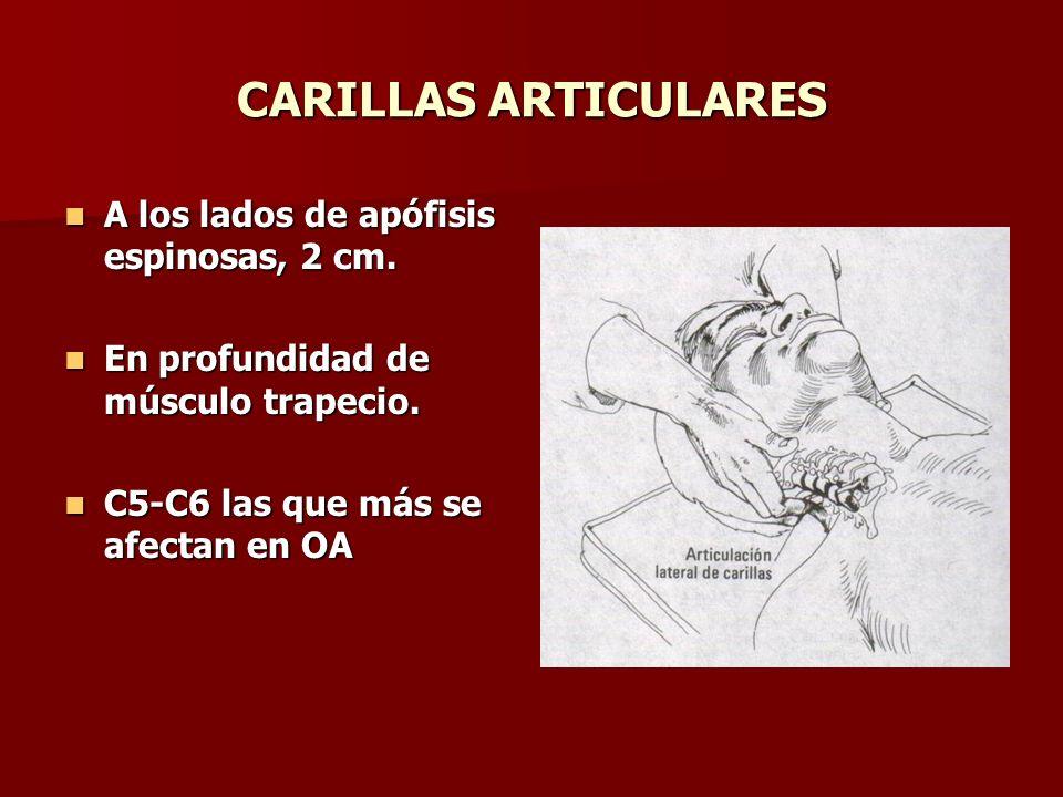 CARILLAS ARTICULARES A los lados de apófisis espinosas, 2 cm.